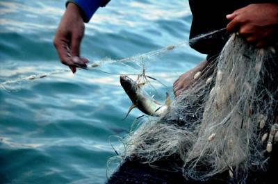 'Đặc sản' cá lưới cước ở Hạ Long