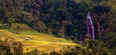 Một vòng mùa lúa Lào Cai