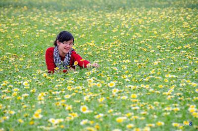 Đẹp lung linh mùa hoa cải bên sông Đuống