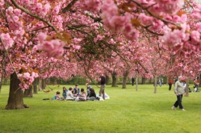 Mùa xuân - du lịch lễ hội hoa