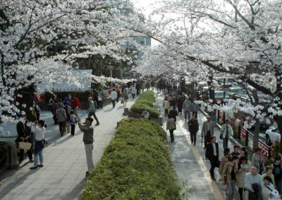 Người Nhật 'sống chậm' khi ngắm hoa anh đào