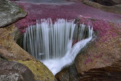 Sững sờ vẻ đẹp sông Cano Cristales
