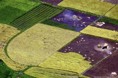 'Tấm thổ cẩm' trên cánh đồng mới gặt ở Bắc Sơn