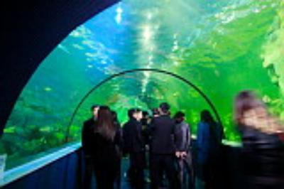 Thích thú thám hiểm thủy cung lớn nhất Việt Nam