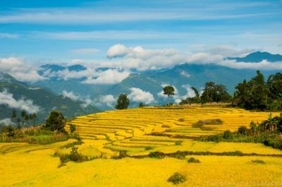 Thu vàng miên man ở Y Tý - Lào Cai