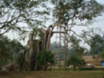 Tư vấn du lịch Tuyên Quang