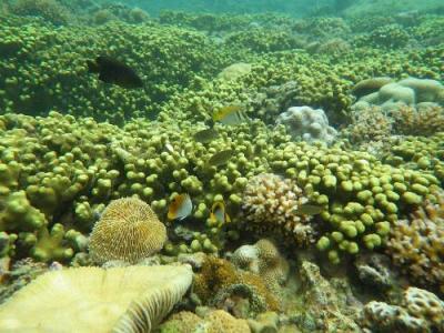 Về đảo tôm hùm Bình Ba lặn biển ngắm san hô