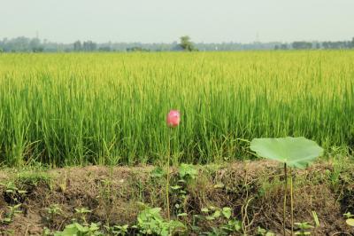 Vẻ đẹp thanh bình của miền sông nước An Giang