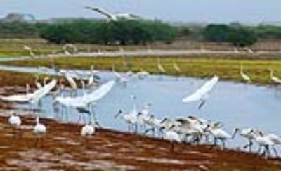 Khu bảo tồn rừng ngập mặn Xuân Thủy