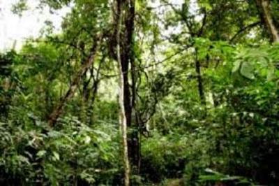 Khu rừng nhiệt đới ẩm Kon Hà Nừng