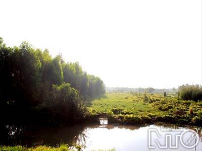 Khu sinh thái rừng tràm chim Vị Thủy