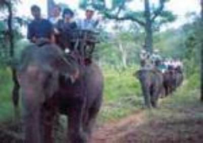 Làng voi Nhơn Hòa