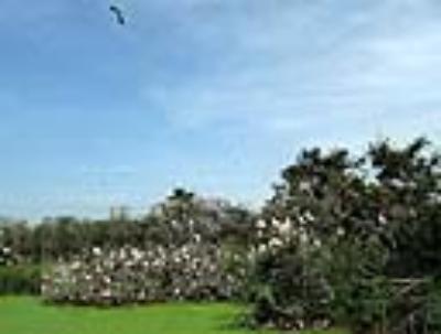 Sân chim Ngọc Hiển
