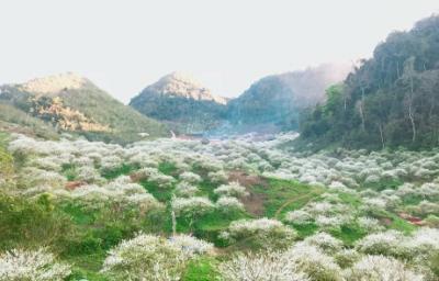 Thung Lũng Mận Mu Náu