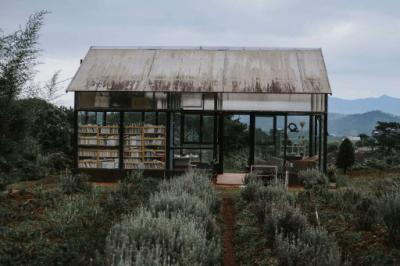 Tùng Hạ Lavender Farm
