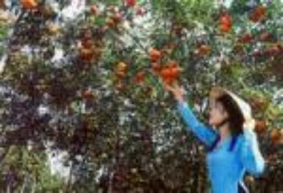 Vườn cây ăn trái Lái Thiêu