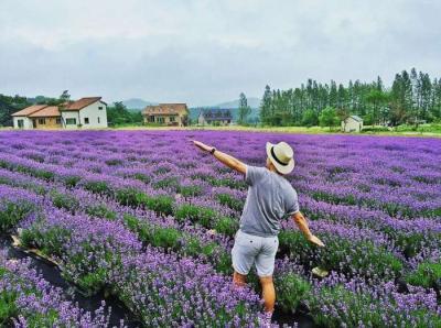 Vườn Hoa Lavender Đà Lạt