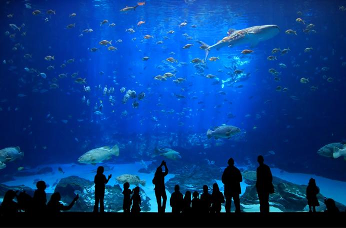 Thủy cung có diện tích 3.400m2, một đại dương thu nhỏ với 300 loài sinh vật biển quý hiếm, lạ mắt
